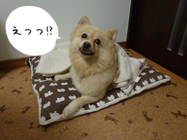 kinako110907_1