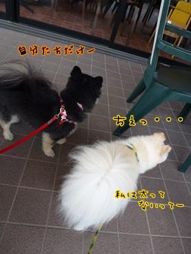 achakusatsu1206.jpg