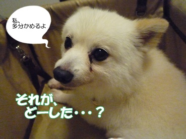 azuki110929_2.jpg