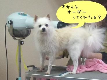 azuki111112_2.jpg