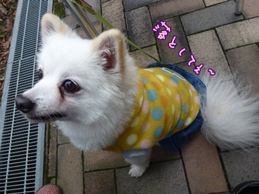 azuki111209.jpg