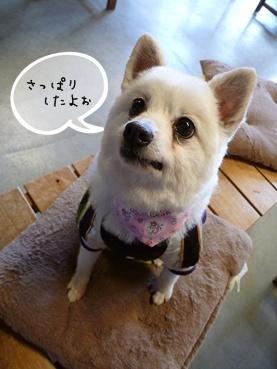 azuki111221_2.jpg