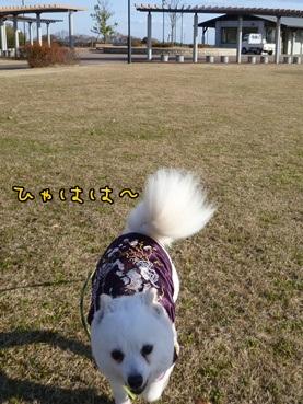 azuki111221_3.jpg