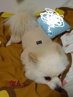 azuki120418_3.jpg