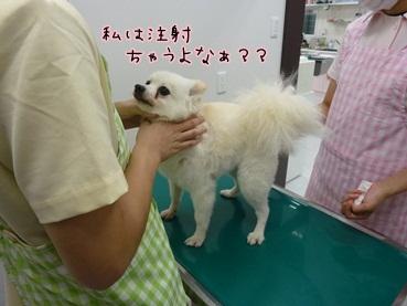 azuki120616_2.jpg