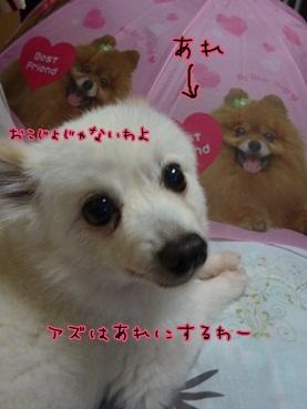 azuki120628_2.jpg
