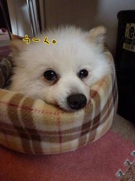 azuki120709_2.jpg