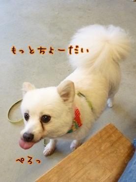 azuki120908_2.jpg