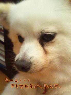 azuki120911_2.jpg