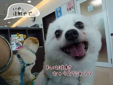 azuki120916.jpg