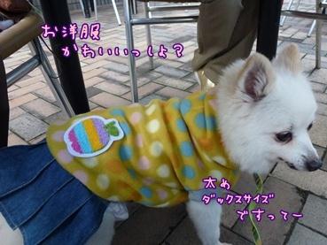 azuki1209_2.jpg