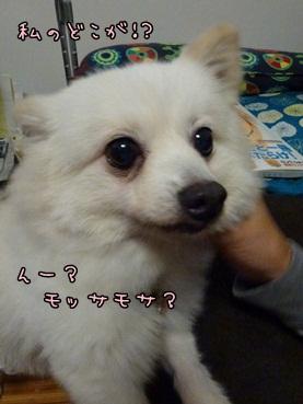azuki121010_2.jpg