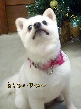 azuki121125_l.jpg