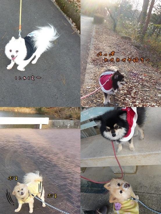 azuki130102-tile.jpg