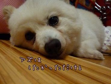 azuki130111.jpg