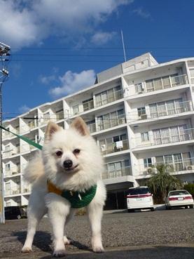 azuki_shirahama.jpg