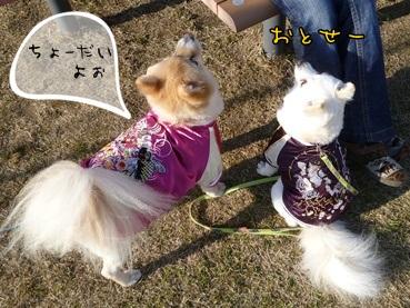 azukina111221_2.jpg