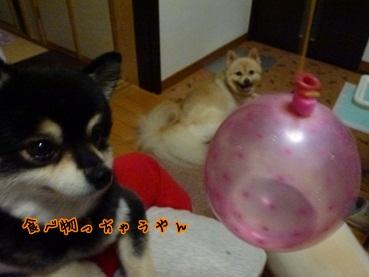 azukina120914_1.jpg