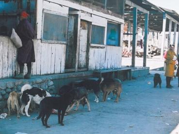 bhutanmarke_dog1.jpg