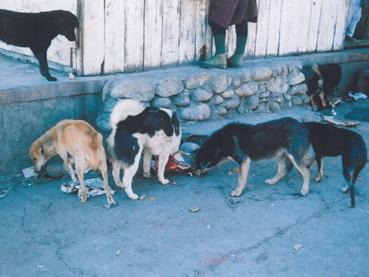 bhutanmarket_dog2.jpg