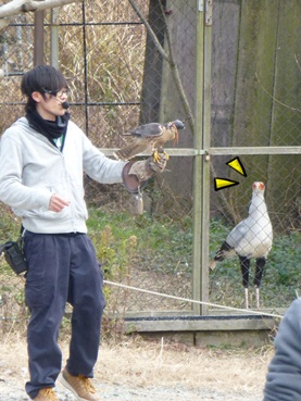bird1301_2.jpg
