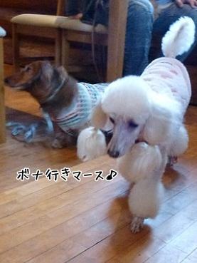 bonachan120331_5.jpg