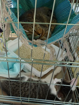cat110918_1.jpg