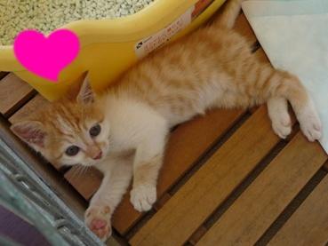 cat110918_2.jpg