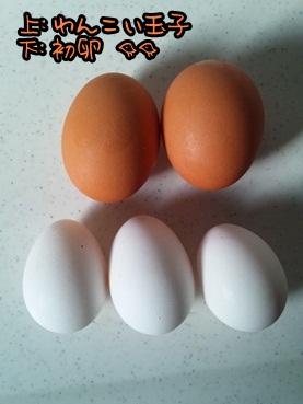 egg1206.jpg