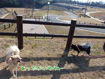 fdog120303_2.jpg