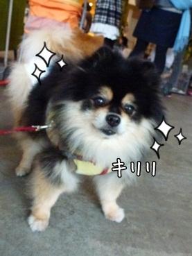 fukuchan121117.jpg