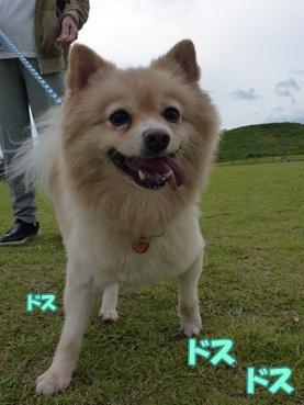 kinako1002_1.jpg