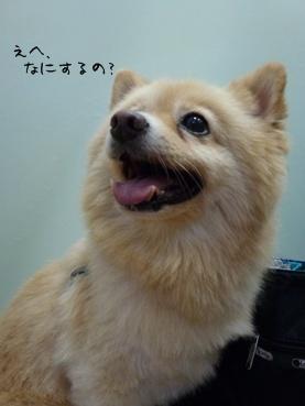 kinako1101001_2.jpg