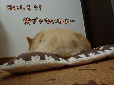 kinako110907.jpg