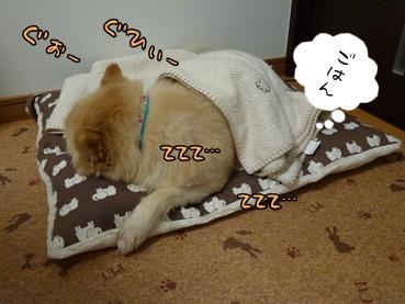 kinako110907_2.jpg