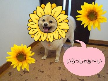 kinako110917_2.jpg