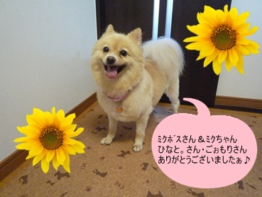 kinako110917_3.jpg