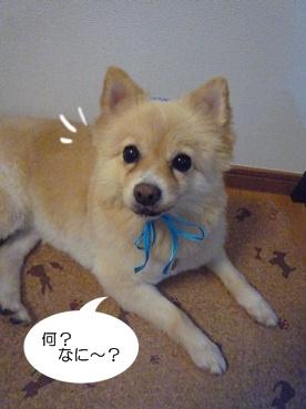 kinako110929.jpg