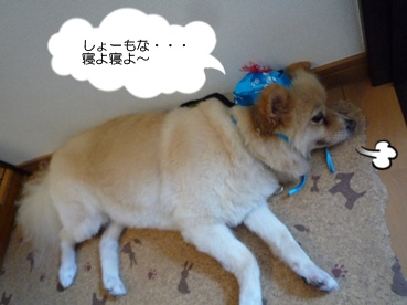 kinako110929_2.jpg
