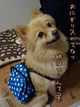 kinako111001_2.jpg