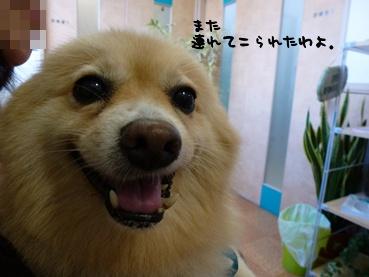 kinako111015_2.jpg