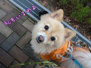 kinako111209.jpg