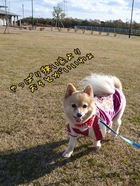 kinako111221_3.jpg