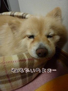 kinako120201.jpg