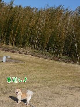 kinako120303.jpg