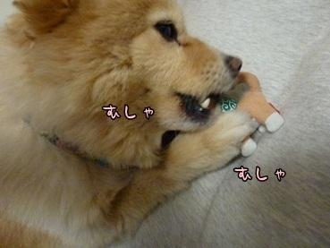 kinako120318_5.jpg