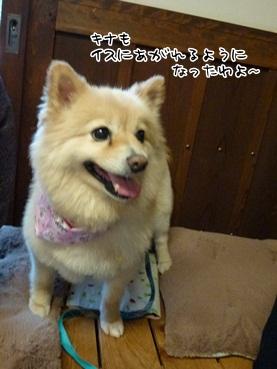 kinako120320_2.jpg