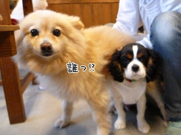 kinako120428_2.jpg