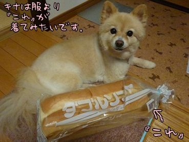 kinako120621.jpg