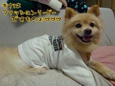 kinako120724_2.jpg